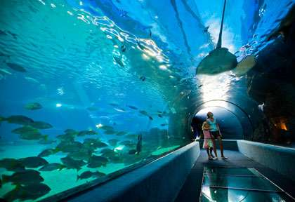 Visite Ocearium de Hawaii